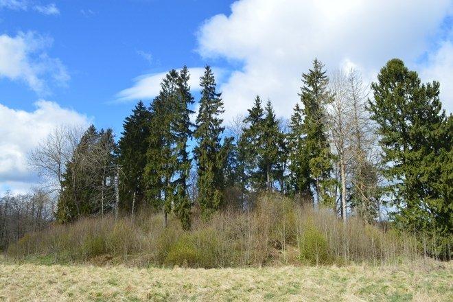Galinių piliakalnis