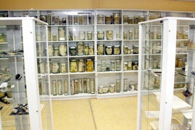 PATHOLOGICAL ANATOMY DIVISION OF ŠIAULIAI HOSPITAL